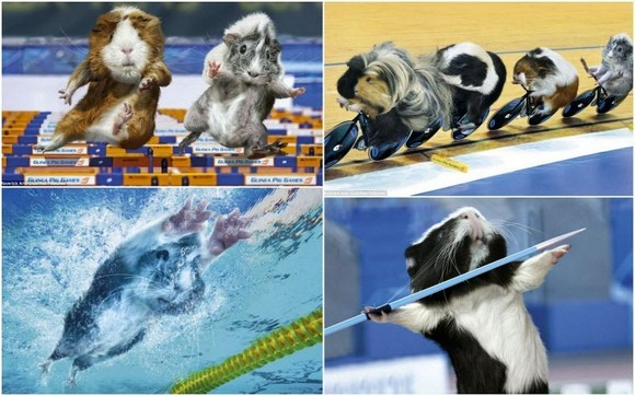 guinea-pig-games[2].jpg