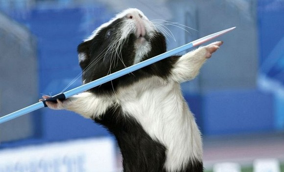guinea-pig-games-0[2].jpg