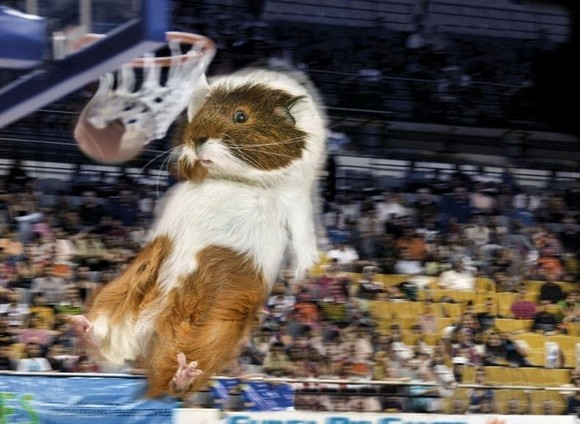 guinea-pig-games-4[2].jpg