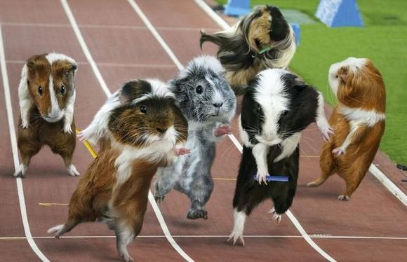 guinea-pig-games-7[5].jpg