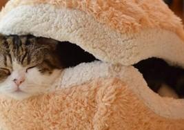 貓貓漢堡包睡枕